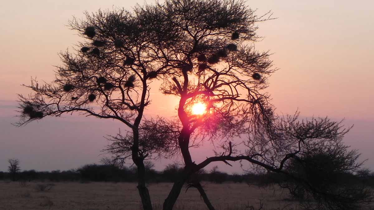 Africa sunset low res rgbstock